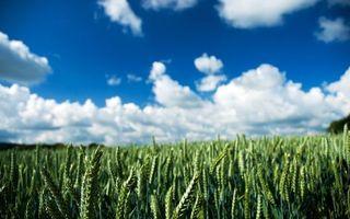Бесплатные фото поле,луг,колоски,небо,облака,рожь,пшеница