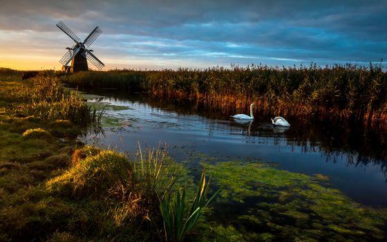 Бесплатные фото природа,мельница,камыш,лебеди,ручей