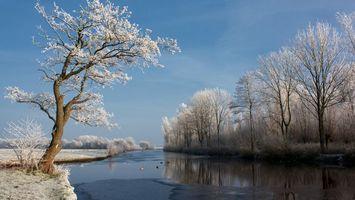Бесплатные фото река,зима,небо,деревья,снег,мороз,утки