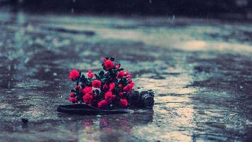 Фото бесплатно розы, красные, дорога