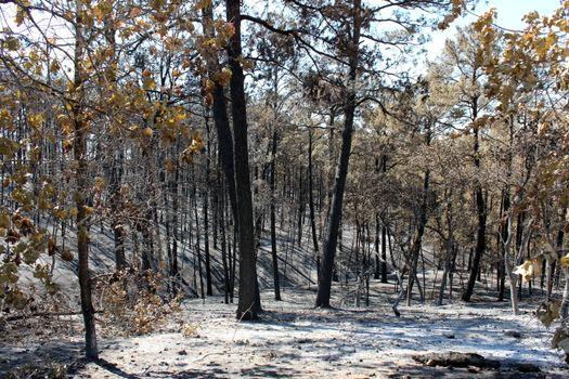 Фото бесплатно снег, кусты, деревья