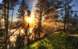 Фото бесплатно трова, дерево, солнце
