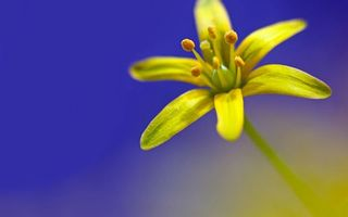 Photo free flower, petals plant, leaves