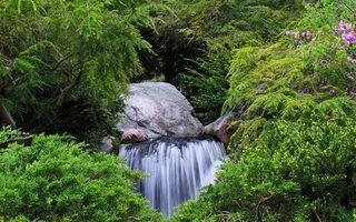 Бесплатные фото водопад,ручей,лес,валун,деревья,зелень,природа