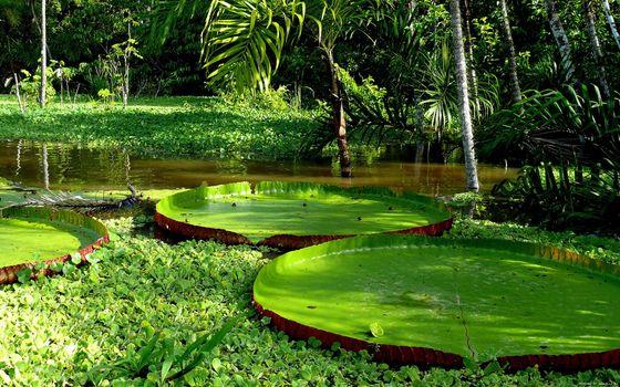 Photo free victoria regia, amazon, plants