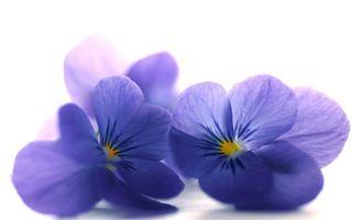 Фото бесплатно цветок, розовые, лепестки, цветы