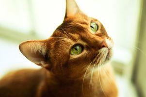 Фото бесплатно котэ, котович, смотрит, рыжий, кот