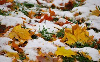 Фото бесплатно листья клена, земля, осень