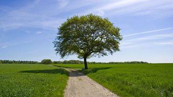 Фото бесплатно дорога, земля, трава, зеленый, дерево, листва, небо, горизонт, пейзажи