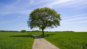 Photo free road, earth, grass