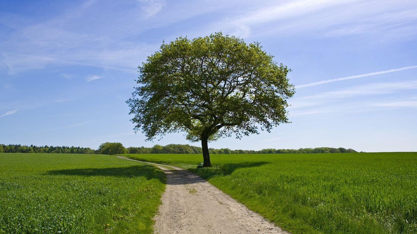Фото бесплатно дорога, земля, трава, зеленый, дерево, листва, небо, горизонт, пейзажи, пейзажи