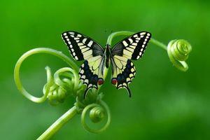 Бесплатные фото цветок,бабочка,макро
