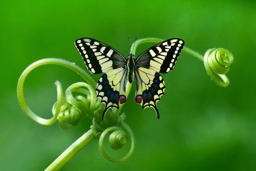 Бесплатно цветок, фото бабочка на телефон
