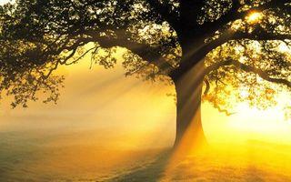 Фото бесплатно дерево, туман, солнце