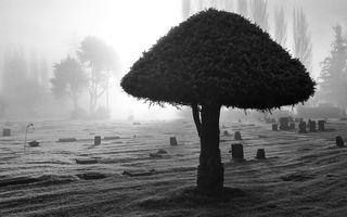 Фото бесплатно дерево, крона, листья, кора, ветки, кладбище, земля, песок, трава, природа, пейзажи