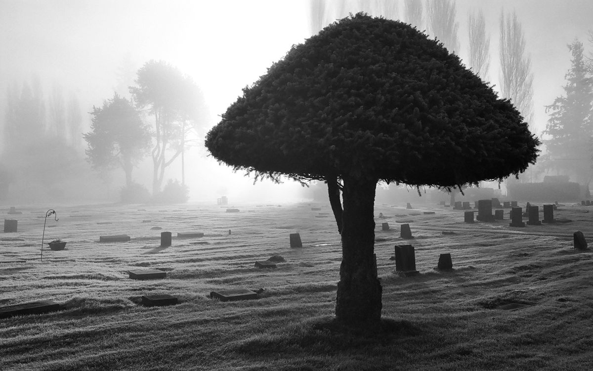 Фото бесплатно дерево, крона, листья, кора, ветки, кладбище, земля, песок, трава, природа, пейзажи, пейзажи