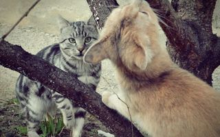 Бесплатные фото дерево, улица, кошки, два, шерсть, мех, усы