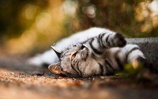 Фото бесплатно кот, асфальт, поребрик