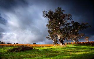 Заставки тучи,гроза,дерево,ветер,поле,пейзажи