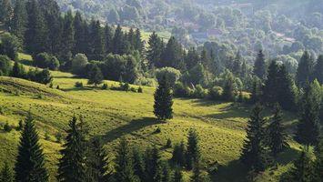 Фото бесплатно холмы, деревья, кусты