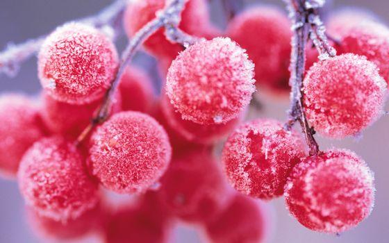 Photo free viburnum, berries, fruits