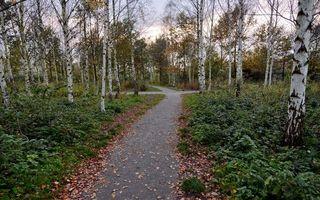 Фото бесплатно лес, деревья, трава