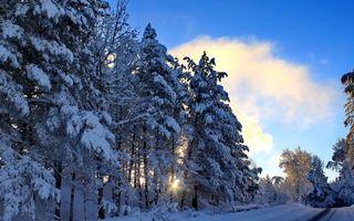 Фото бесплатно лес, зима, дорога