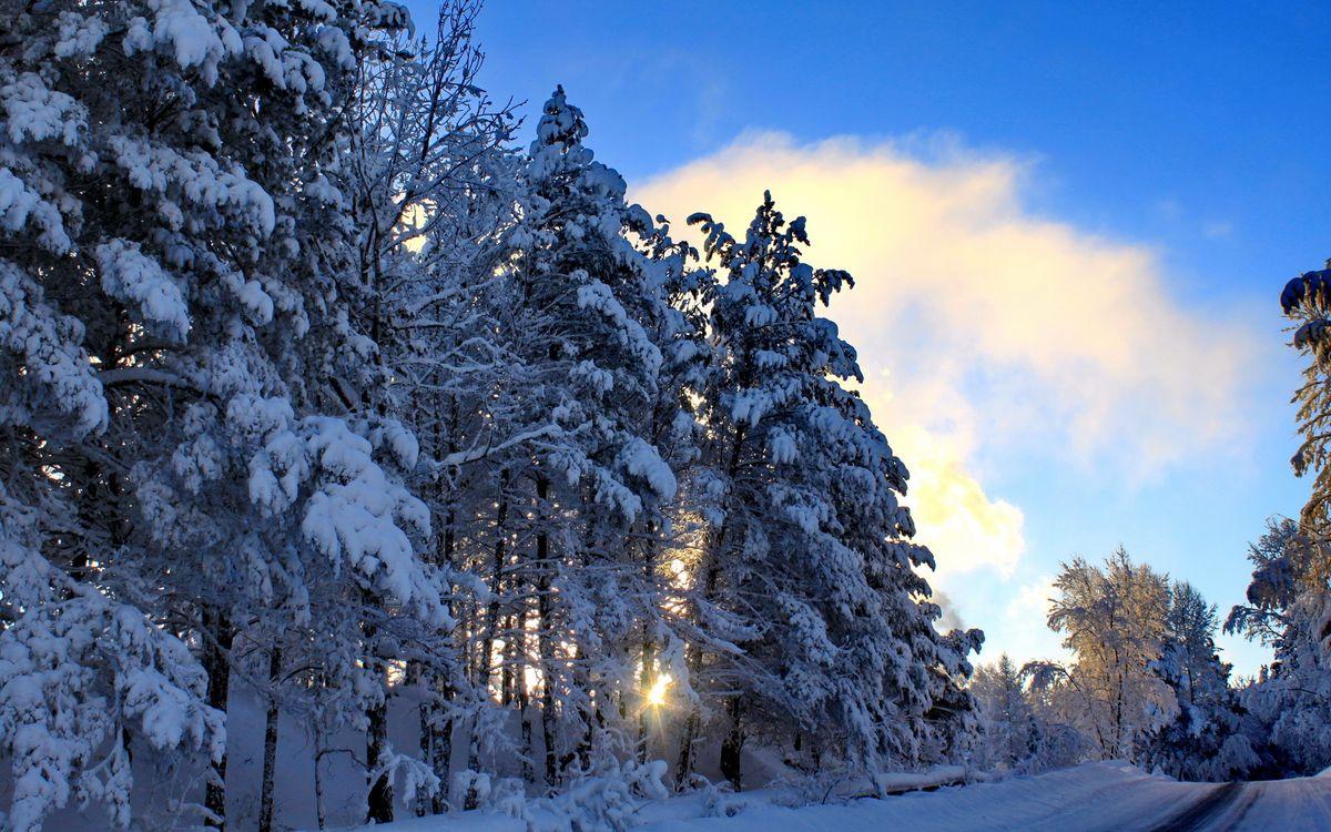 Фото бесплатно лес, зима, дорога, солнце, снег, мороз, сугробы, небо, облака, пейзажи, пейзажи