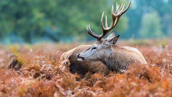 Бесплатные фото лось,рога,уши,трава,желтая,деревья,животные