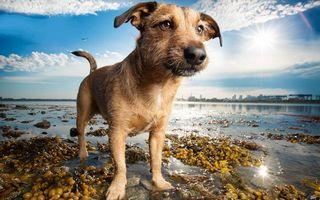 Бесплатные фото пес,морда,глаза,лапы,хвост,шерсть,берег