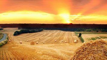 Фото бесплатно поле, тюки, солома