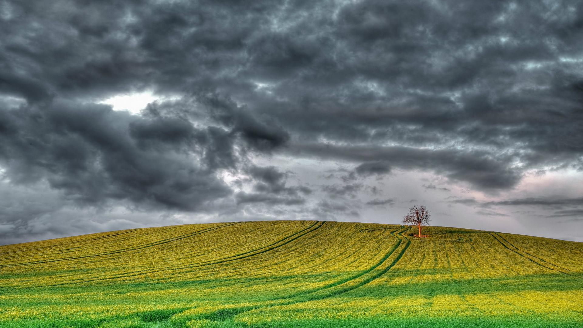 поле, зеленое, следы