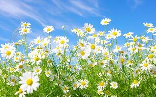 Бесплатные фото поле,синий,ростки,трава,цветок,небо,голубое