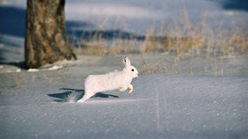 Заставки снег, дерево, сугроб, грызун, шуба, мех, животные