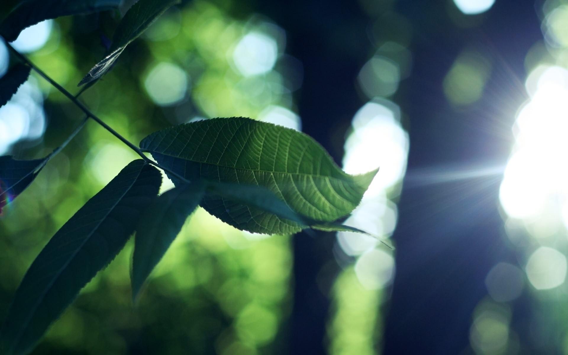 ветка, листья, зеленые