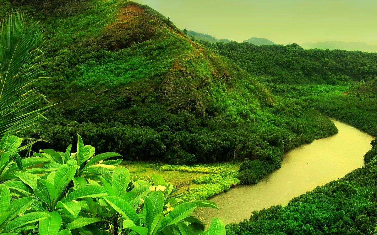 Красивые фотографии на тему вода, река, лес