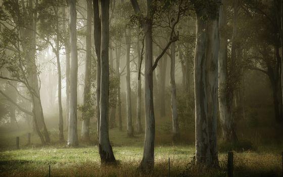 Бесплатные фото туман,деревья,лето