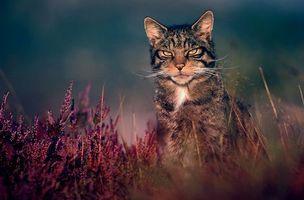 Фото бесплатно дикий кот, в кустах, смотрит