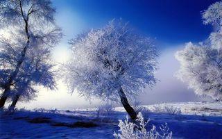 Фото бесплатно иней, деревья, зима
