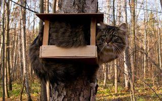 Заставки ситуации, юмор, кот, скворечник, дерево