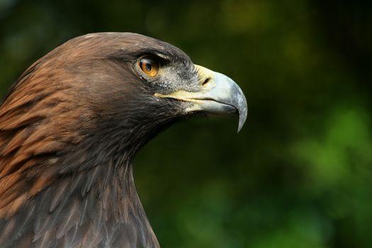 Photos animals, birds without registration