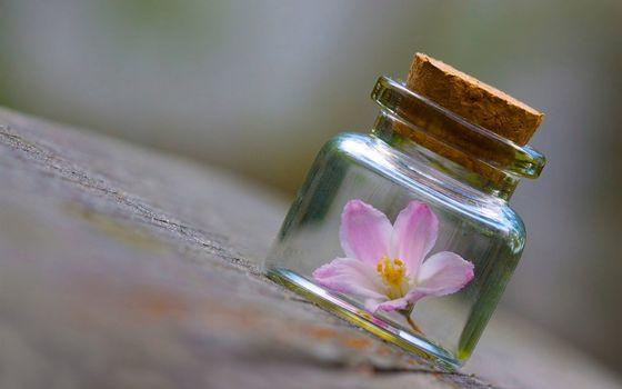 Бесплатные фото банка,колба,пробка,цветок,ампула,стол,лето,разное,цветы