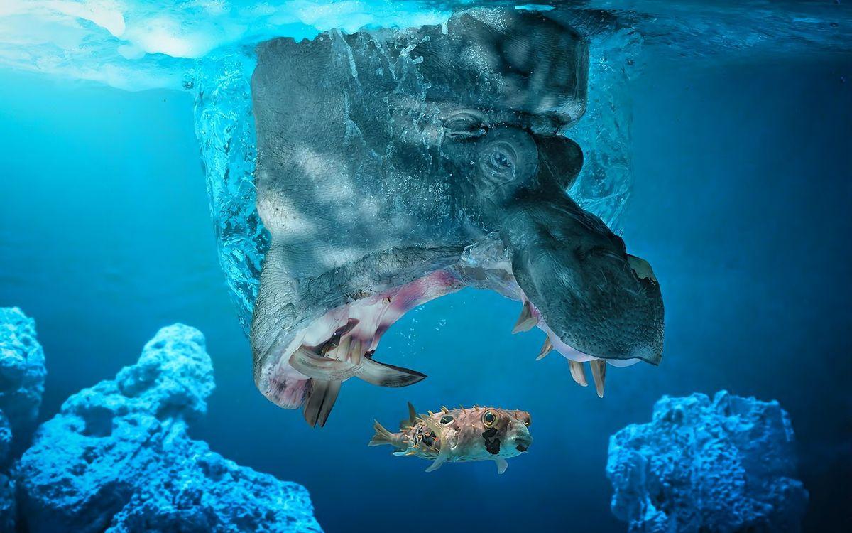 Фото бесплатно бегемот, пасть, клыки, рыбка, пища, животные, животные