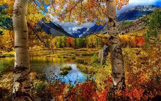 Фото бесплатно березы, пруд, озеро