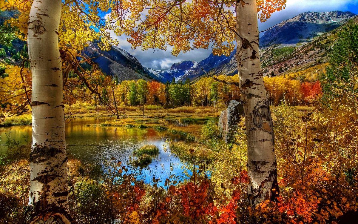 Фото бесплатно березы, пруд, озеро, лес, деревья, трава, кусты, горы, скалы, природа, природа