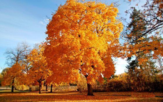 Фото бесплатно оранжевые, листва, природа