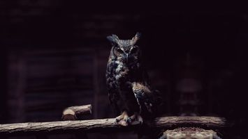 Photo free owl, feathers, wings