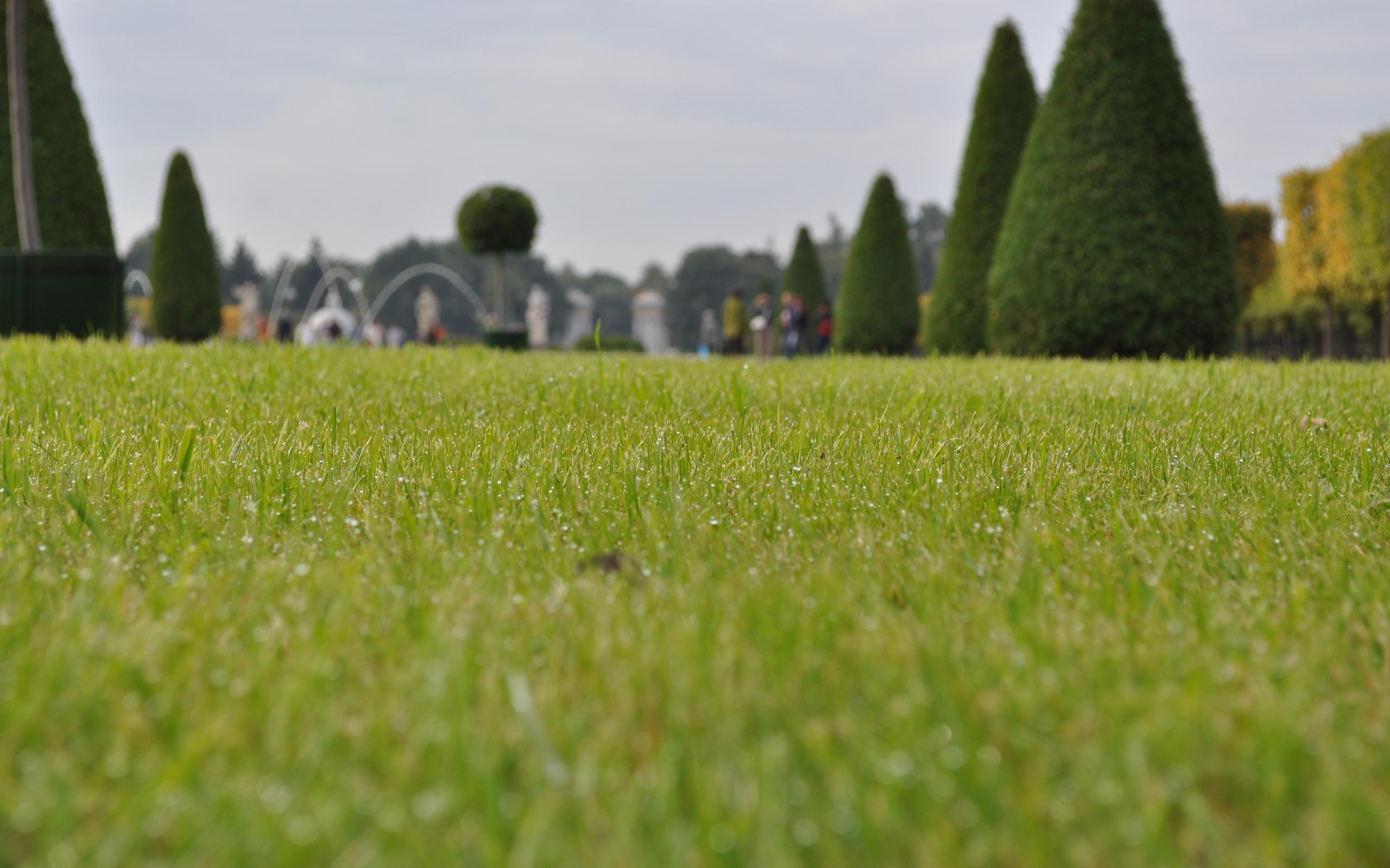 газон, трава, зеленый