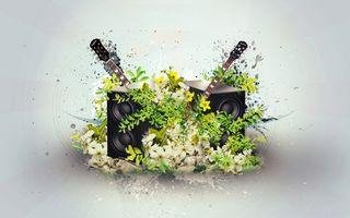 Фото бесплатно колонки, цветки, лепестки