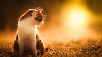 Бесплатные фото кошка,шерсть,уши,усы,трава,цветы,животные